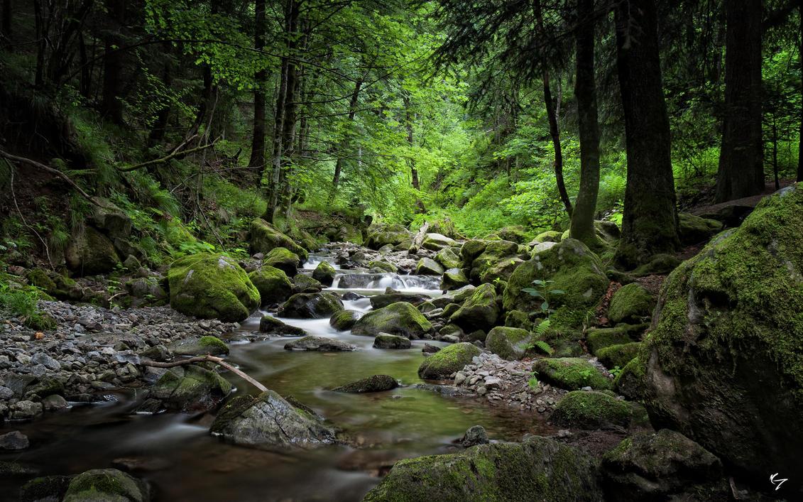 """Résultat de recherche d'images pour """"dark forest+river"""""""