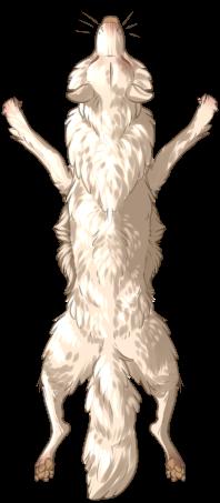 Canine Pelt - Albino
