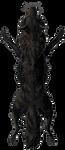 [Image: canine_pelt___melanistic_by_equusballato...6u6ypIWFaQ]