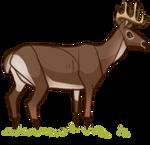 Buck Decoy by EquusBallatorSociety