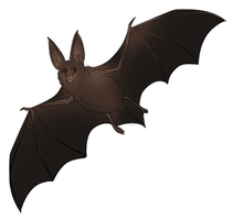 Bat by EquusBallatorSociety