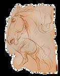 Sketch Fragment by EquusBallatorSociety