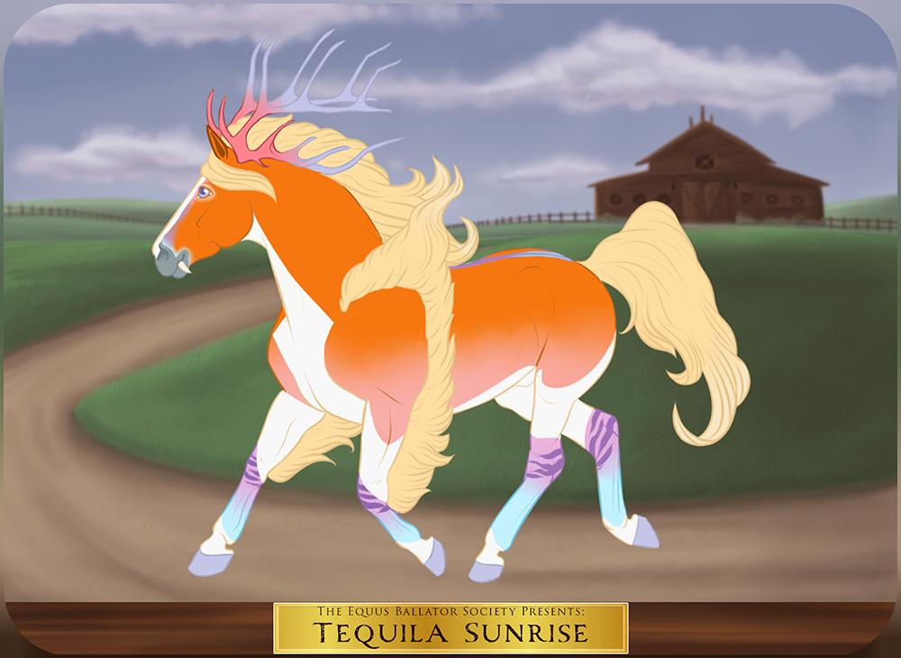 GH 5930 | Tequila Sunrise by EquusBallatorSociety