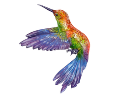 Hummingbird Companion by EquusBallatorSociety