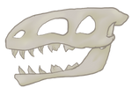 Large Skull