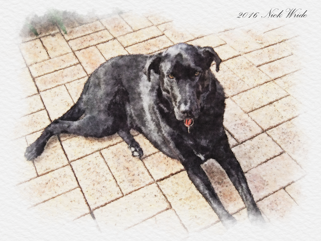 Digital Art from Photo - My Dog, Jett by Hoover1979