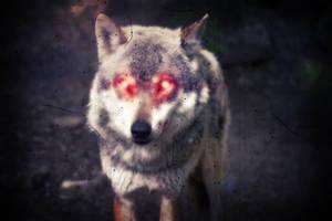Demon Wolf caught on Camera.