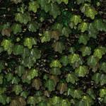 Green Camo Rock Wall 04
