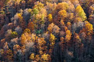 Shades Of Autumn by MaximeDaviron