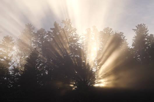 Shine Through Me