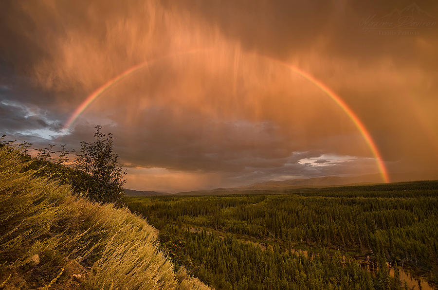 Yukon Gold by MaximeDaviron