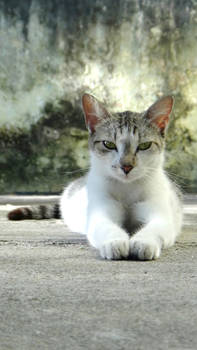 Model Kitty 03