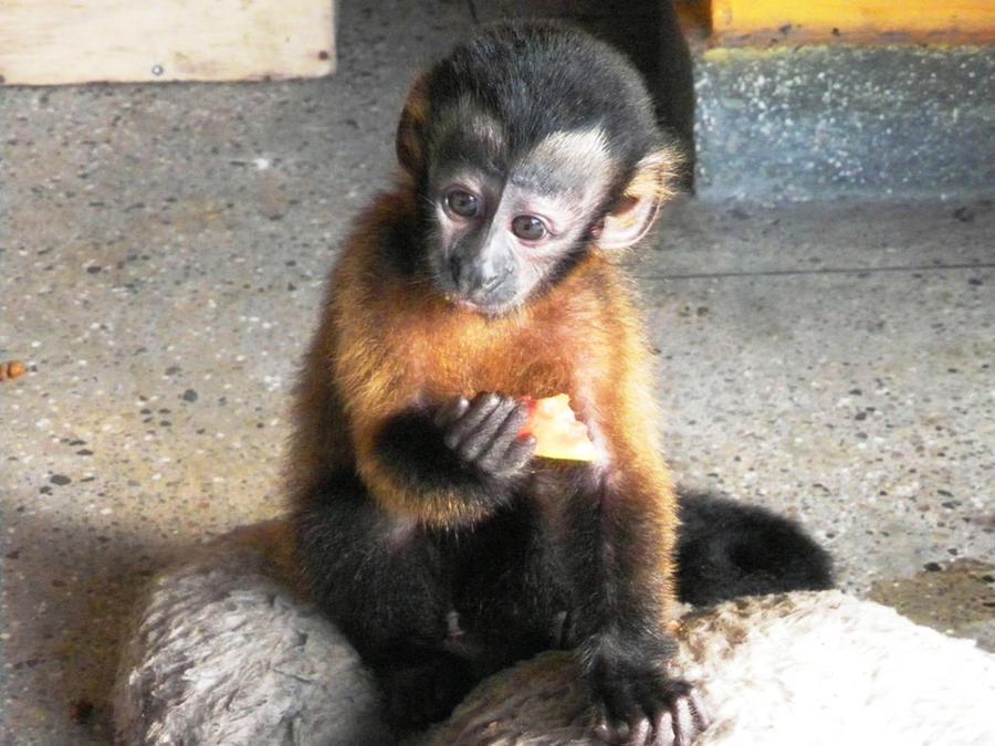 Monkeys Reddit How Can Cole Still Time Travel