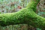 WALLPAPER: Mossy branch