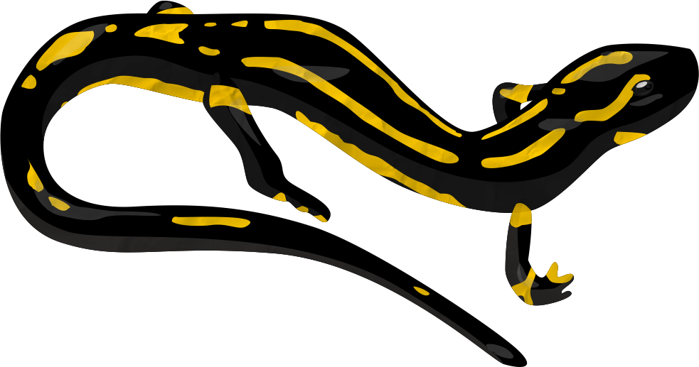 salamander vector by therockydoo on deviantart salamander clip art free salamander cartoon clipart