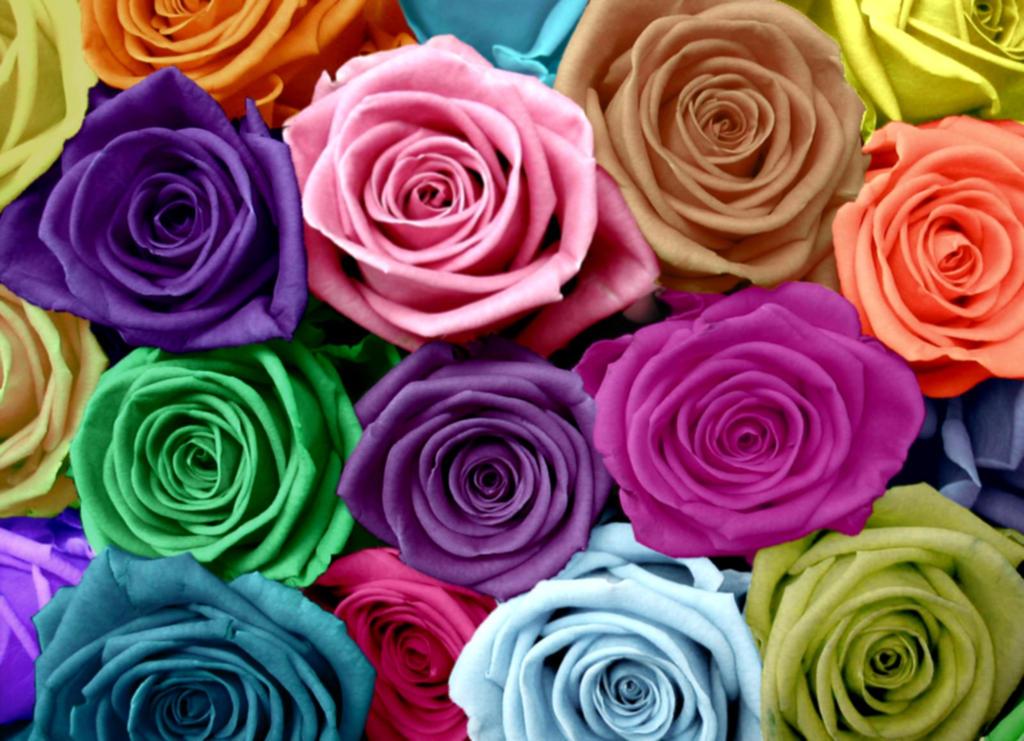 Roses by secretgal1234