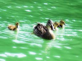 Duckies (: