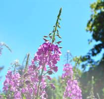 Pretty Purpleness :)