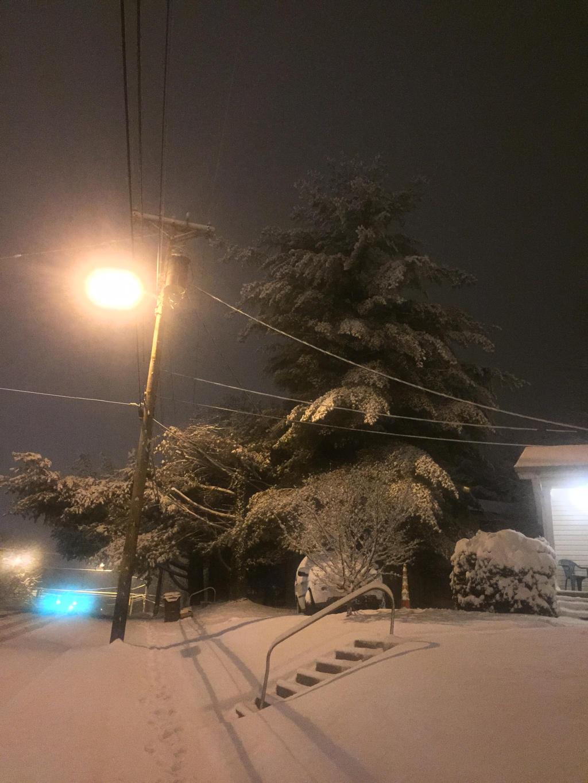 A Christmas Tree in February by Ghostwalker2061