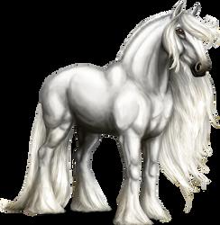 White Shire Horse