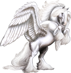 White Shire Pegasus