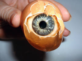 Eye in the shell
