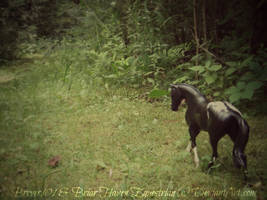 We Love The Thrill of The Hunt by Breyer101
