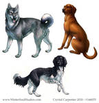 Dog Breeds - Part Two