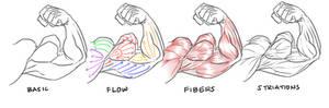 bicep flex definition guide
