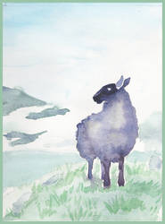Black sheep of Scotland