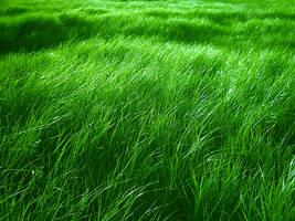 The green , green , grass by sunkmanitu5