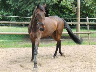 Horse Stock Orlando 11 by Yumani-Chan