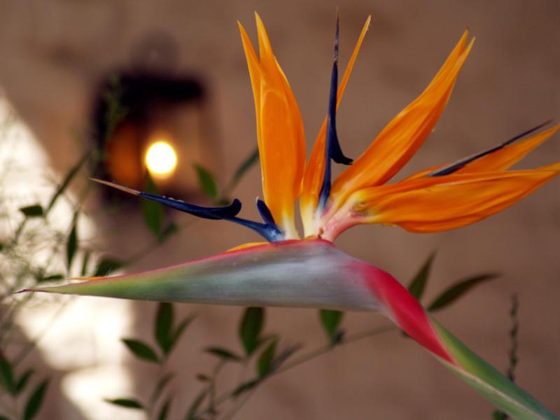 bird in light by mohaganbev