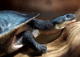 Turtle Turtle by mohaganbev