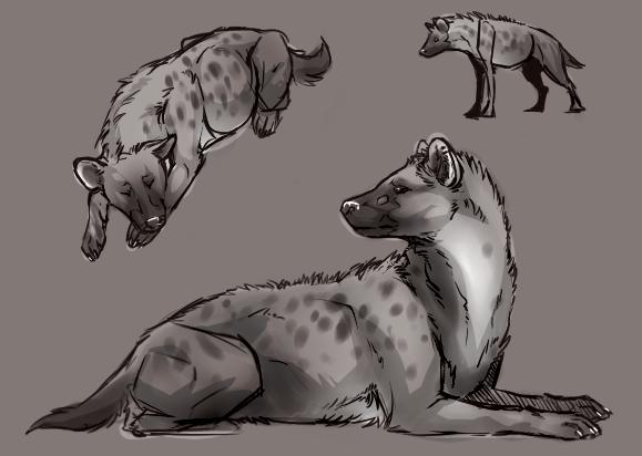 Hyena study