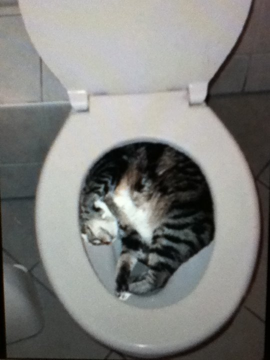 chat divers  My_cat_got_stuck_in_my_toilet__by_brs_icicle-d3dqfhu