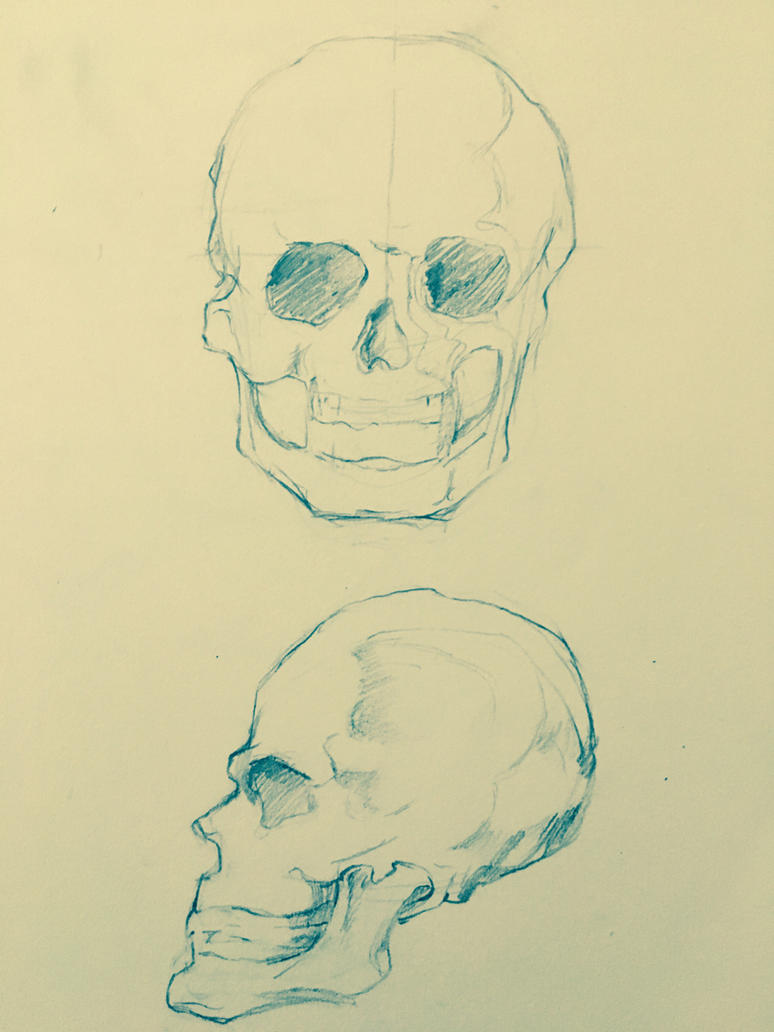 skull studies by cayotze