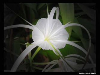 Pure white... by natescrewz