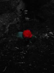 flor by feitio