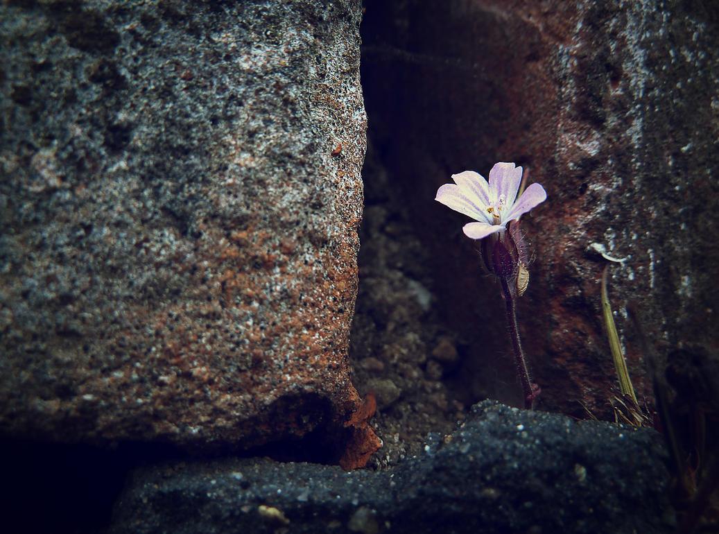 little wallflower by teetotally