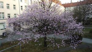 Baum in Bluete by DrAzraelTod
