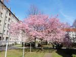 Fruehlingsbaum