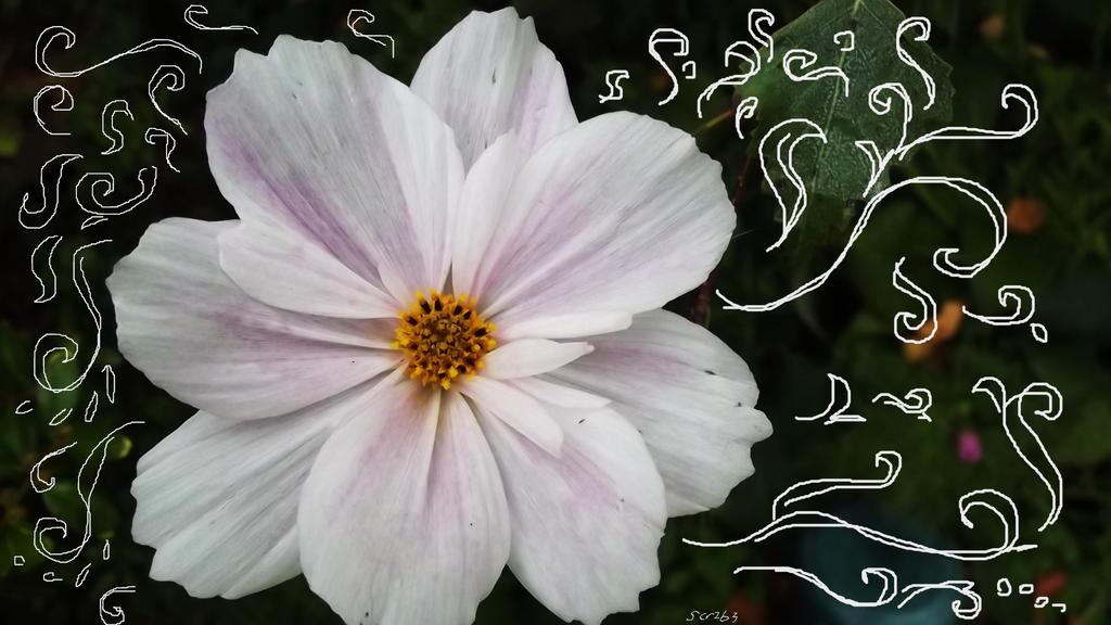 Gilded daisy by Scr1b3