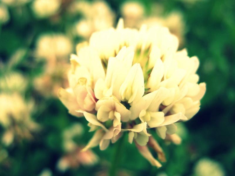 Spring by aroraangel