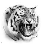 Animal Portrait Drawing