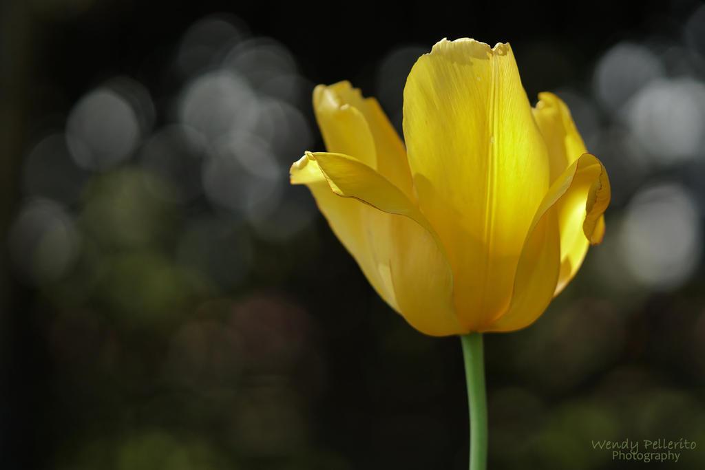 Light on Yellow by wendy-pellerito