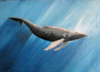 Humpback Whale (sold) by nickryall