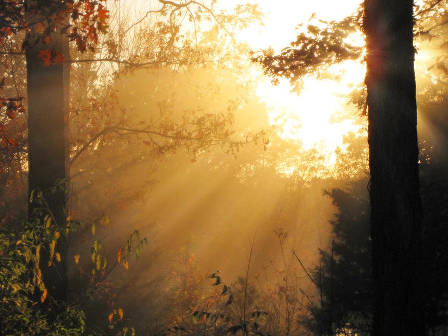 Mystic's Grove by WildPhotographer221