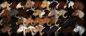 NIEC - Horses of 2016