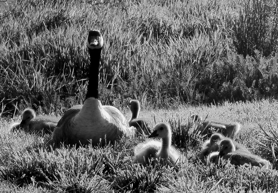 Mamma watching her babies by jenniferhl72